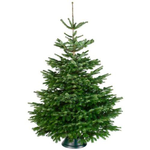 Central Park kerstboom Nordmann 175-200cm
